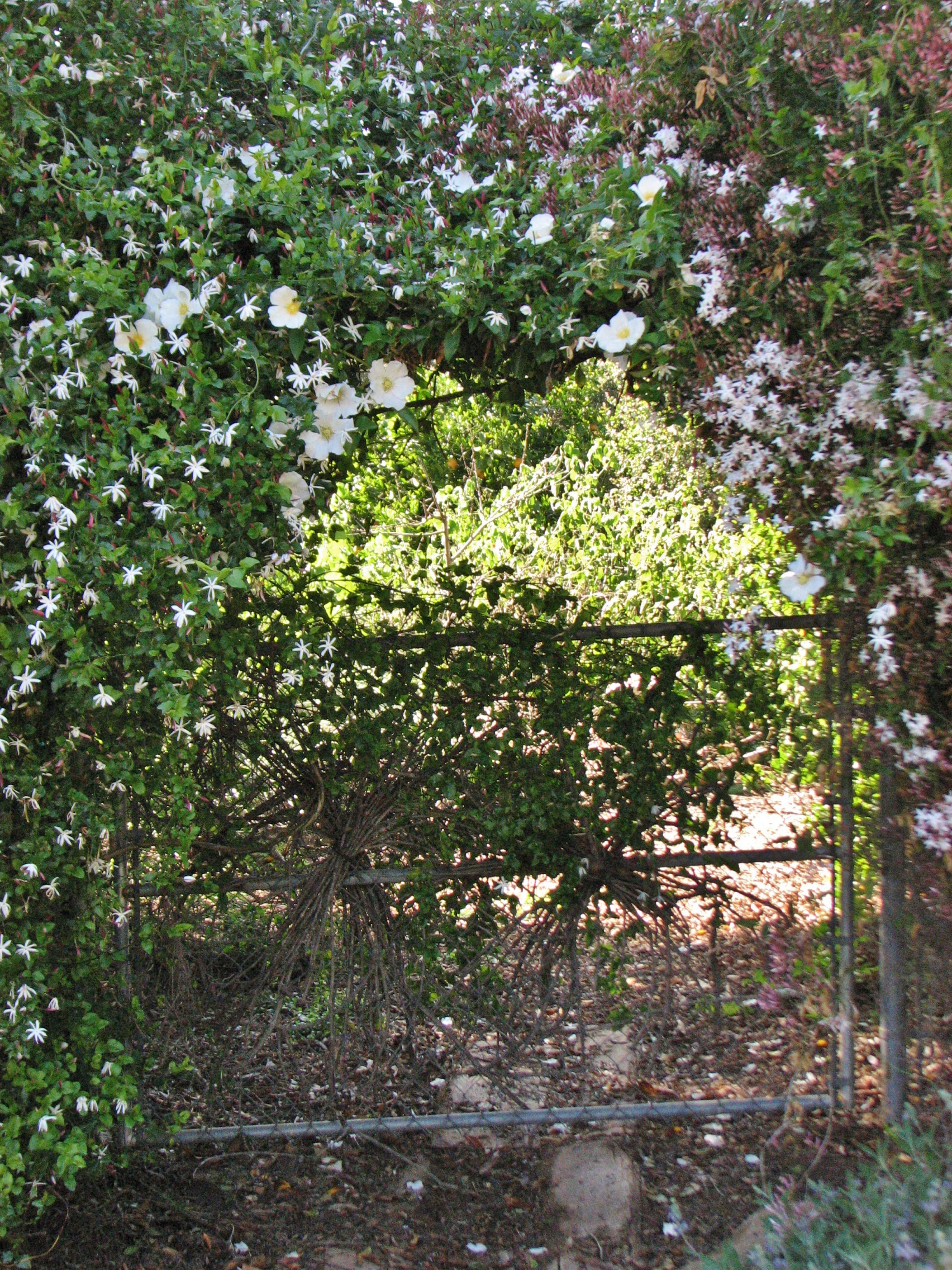 Blossom Gate