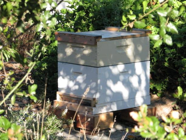Beehive warming up.