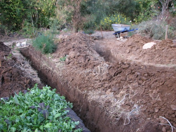 These first two trenches will collect rainwater from the pathways and channel it the length of the garden.