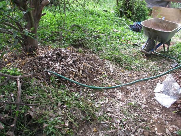 Planting spores 014