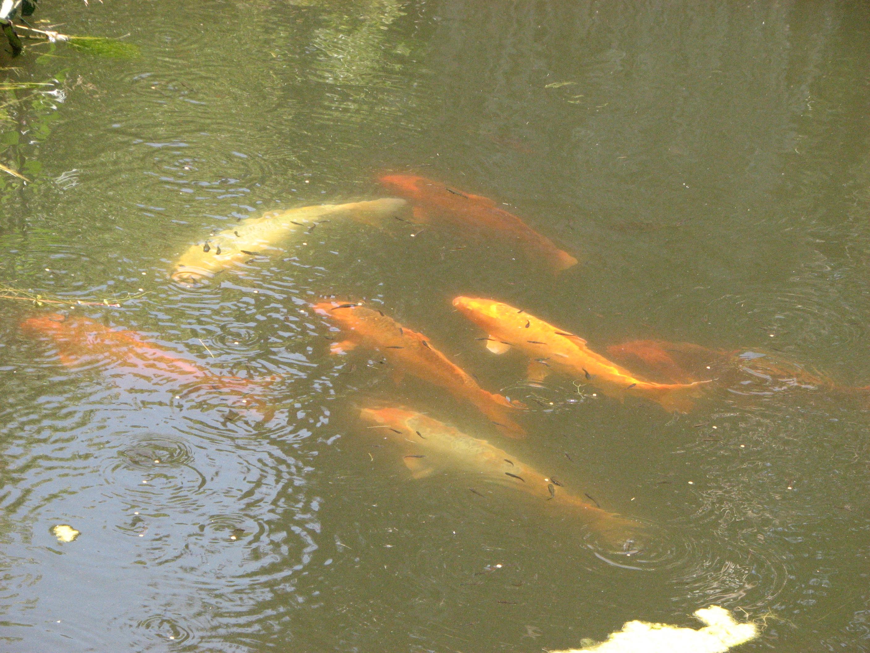 Water saving vegetariat for Fake fish for pond