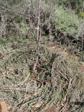 Sheet mulching around trees  is much the same, except you add a little manure or compost tea if you have it.