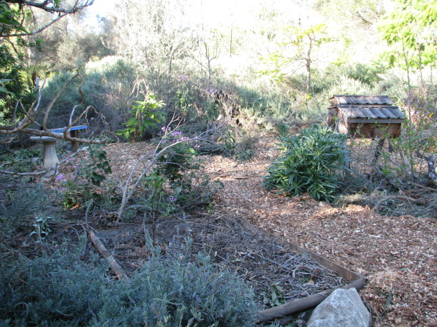 This mulch will greatly help the Asian pears  and cherries which struggle with the dry heat of the summer.  The ground will be kept moist and reduce evaporation, holding in humidity.  We'll be planting more heavily in  this area, too.