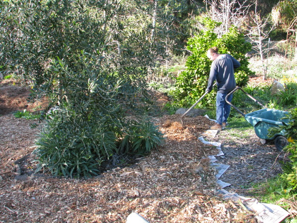 MIranda working on a large pathway near our large hugelbed.