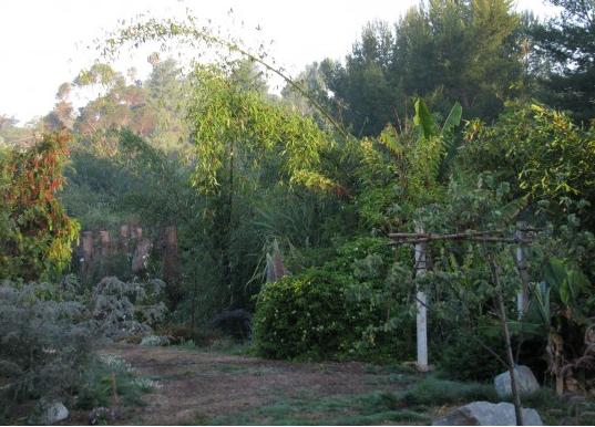 Finch Frolic Garden, year 3.