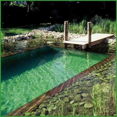 A natural pool upgrades your pool to a lovely pond without the use of chemicals.