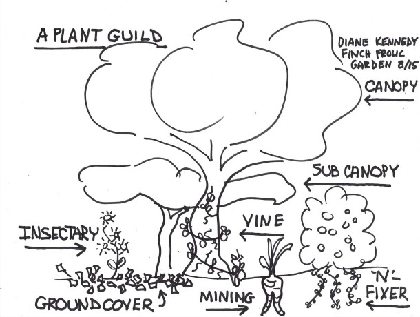 What makes up a plant guild.