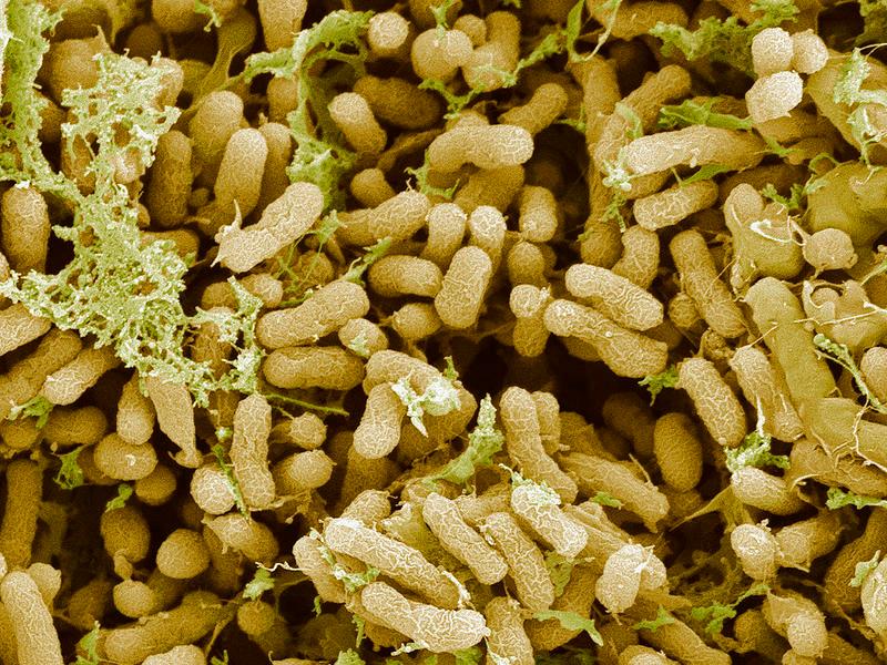 nitrogen fixation in plants pdf